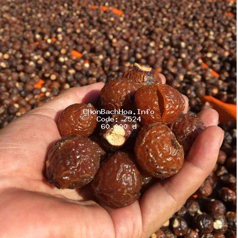 (HÀNG XUẤT KHẨU VỤ MỚI) Quả Bồ hòn tách hạt Gia Lai hàng tuyển loại 1 chín khô nhiều nhựa