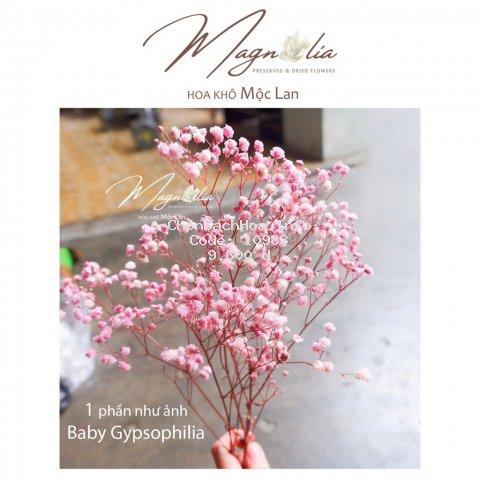 Hoa baby ướp ❤️FREESHIP❤️ Gypsophila hoa khô trang trí phòng ngủ, làm đồ handmade